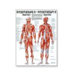 Poster Physiotherapie IV